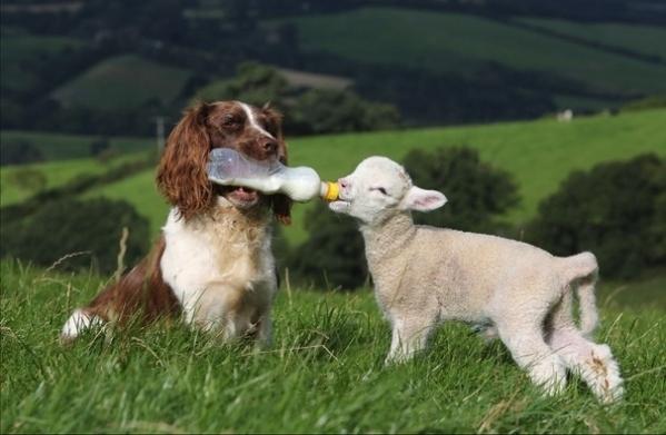 animalfriendships
